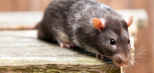 Mouse control in the Food industry