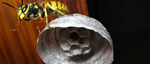 Moths, Wasps and Ants