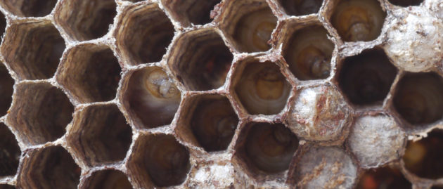 Have You Found Wasps' Nests?